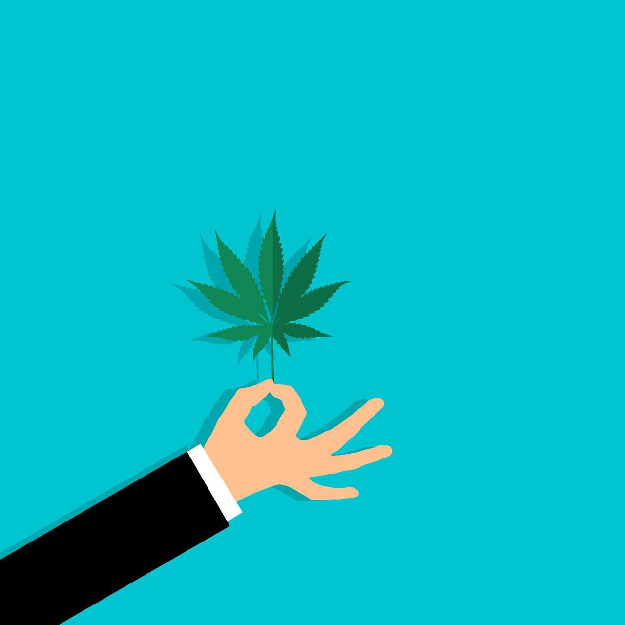 graphic of a hand holding a cannabis leaf